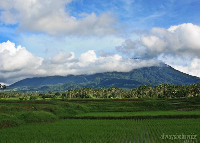 ricefields3